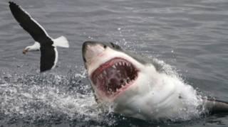 Nada de tubarões ou cobras: 6 animais assassinos que você talvez não conheça