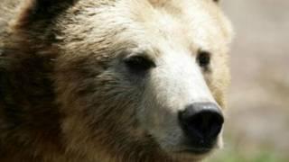 В США медведь гризли убил велосипедиста