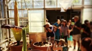 Pengunjung mengerumuni bunga bangkai