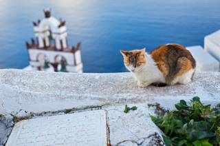 Кот в Греции