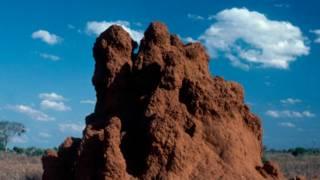 Cientistas encontram cupinzeiro de mais de 2000 anos