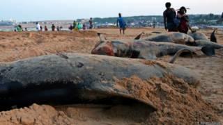 dead hales burial tuticorin