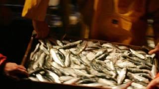 عمليات الصيد تتراجع