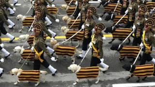 गणतंत्र दिवस पर दिल्ली के राजपथ पर परेड में हिस्सा लेते सेना के कुत्ते.