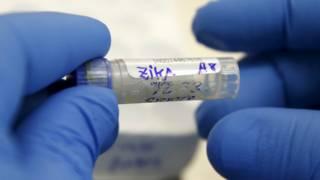 Sampel virus Zika