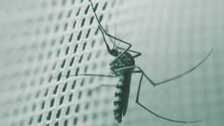 virus_zika_