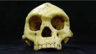 Череп, найденный в пещере на острове Флорес