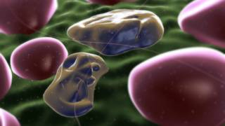 Células infectadas
