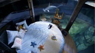 """El """"hotel"""" en el acuario de París"""