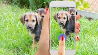 Una mujer graba un video de un cachorro
