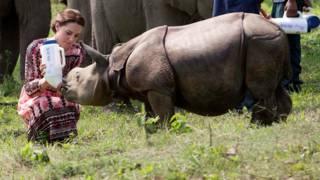Герцогиня Кембриджская кормит носорога