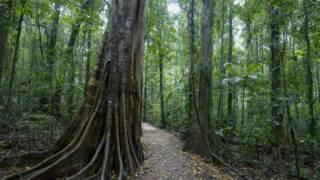 Исследование: рост выбросов CO2 озеленил планету
