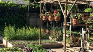La familia que produce miles de kilos de comida en el patio de su casa