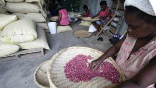 Por qué causan polémica las toneladas de maní que EE.UU. quiere enviar a Haití