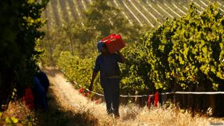 фермерское хозяйство в ЮАР