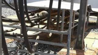 बिजली घर के ट्रांसफ़ारमर पर गिरा बंदर.