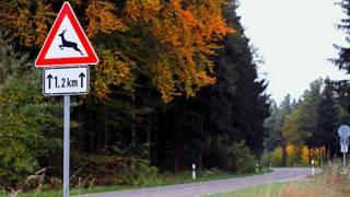 """Дорожный знак """"Животные на дороге"""""""