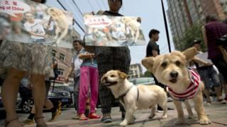 Собаки в Китаї