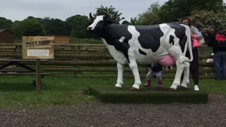 Корова на ферме