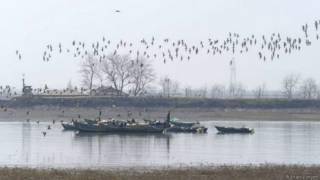 उत्तर कोरिया पक्षी