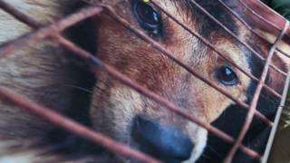 _dog_cage