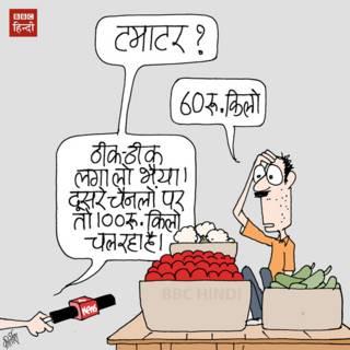 bbc hindi, cartoon, kirtish, media, tomato