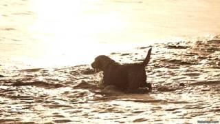 पानी में जा रहा कुत्ता