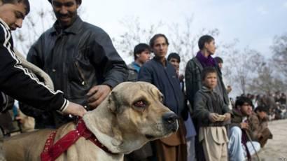 عکس هایی از جنگ در افغانستان