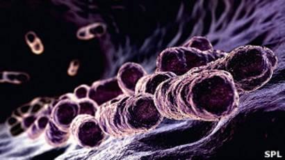como entran los microbios a nuestro cuerpo