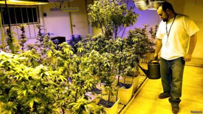 Мой сад выращивание марихуаны хроническое употребление марихуаны