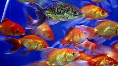 La nueva forma de contar los millones de peces del mar - BBC News Mundo