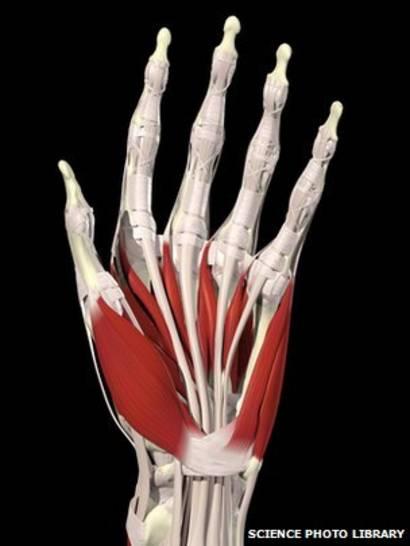 dolores de huesos en las piernas y brazos