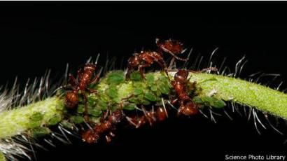 infección parasitaria expansión de la bestia