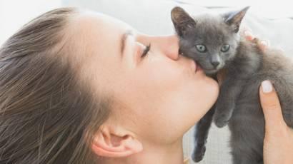 у котенка коронавирус что делать