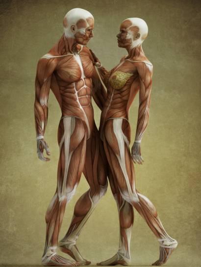 partes que forman los musculos del brazo