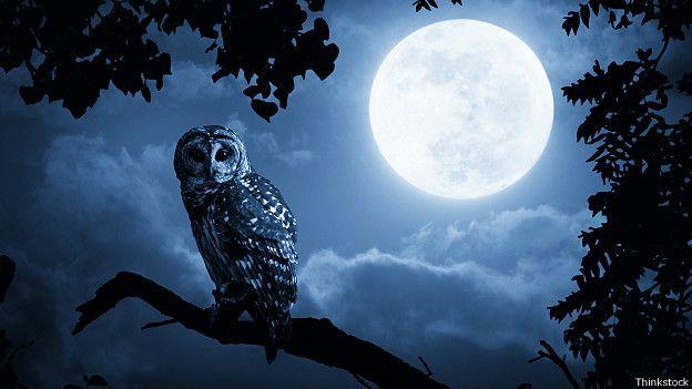 Luna lunera... - Página 13 141117163407_mad_full_moon_owl_624x351_thinkstock