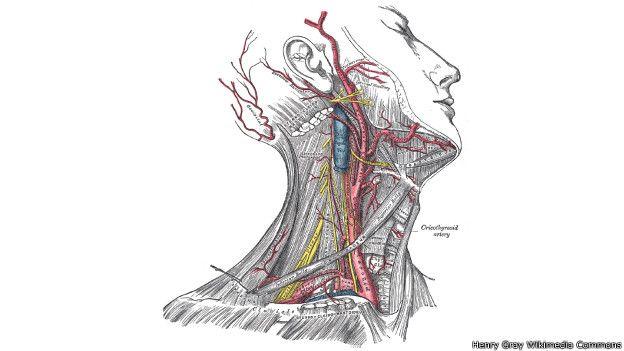 Arteria carótida