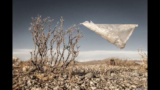 El mundo consume un millón de bolsas de plástico cada minuto. Aquí, una de ellas se quedó enredada en un pequeño arbusto del Altiplano boliviano. Es una foto de Eduardo Leal.