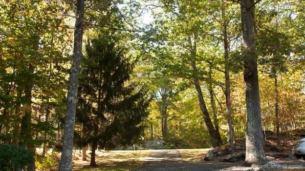 径路交错的森林(图片来源:阿曼达·鲁杰里)