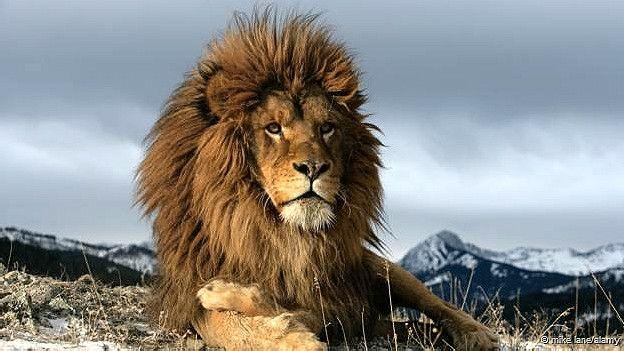 León del Atlas