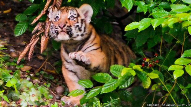 50 Gambar Hewan-hewan Yang Lucu Gratis