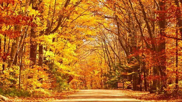 Por qué las hojas de los árboles cambian de color en otoño? - BBC ...