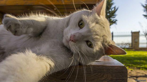 DERGİ - Kediler sahibinin duygularını hissediyor - BBC News