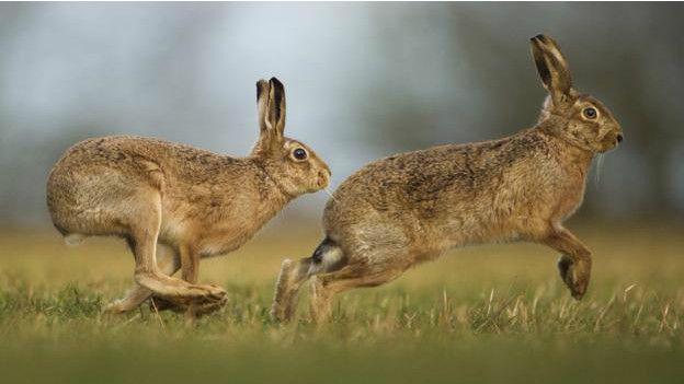 Unduh 68+ Gambar Kelinci Berlari Paling Bagus Gratis