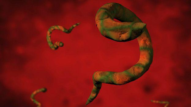 Medicamento parasitos intestinales humanos