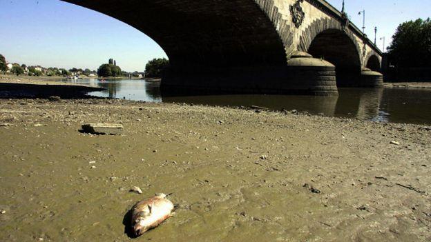 1a4585d51 Londres: cómo el río Támesis fue rescatado de la muerte - BBC News Mundo