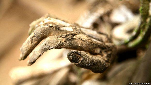 Кисть руки мумии с ногтяи