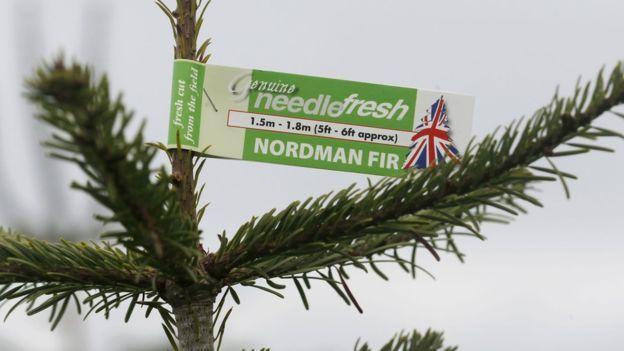 041dd14cf60 El dilema de cada año  ¿árboles de Navidad naturales o artificiales ...