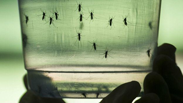 Así es el mosquito \