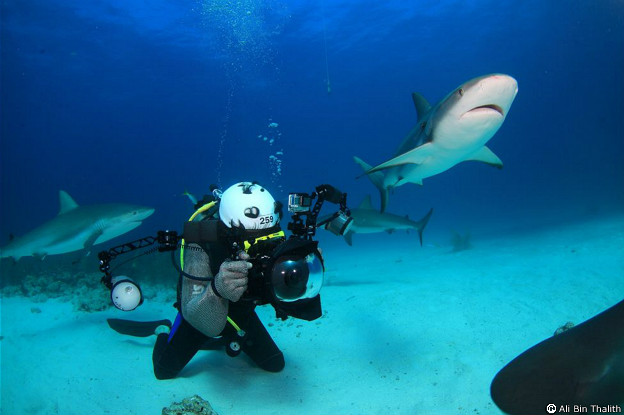 Tiburones en Bahamas